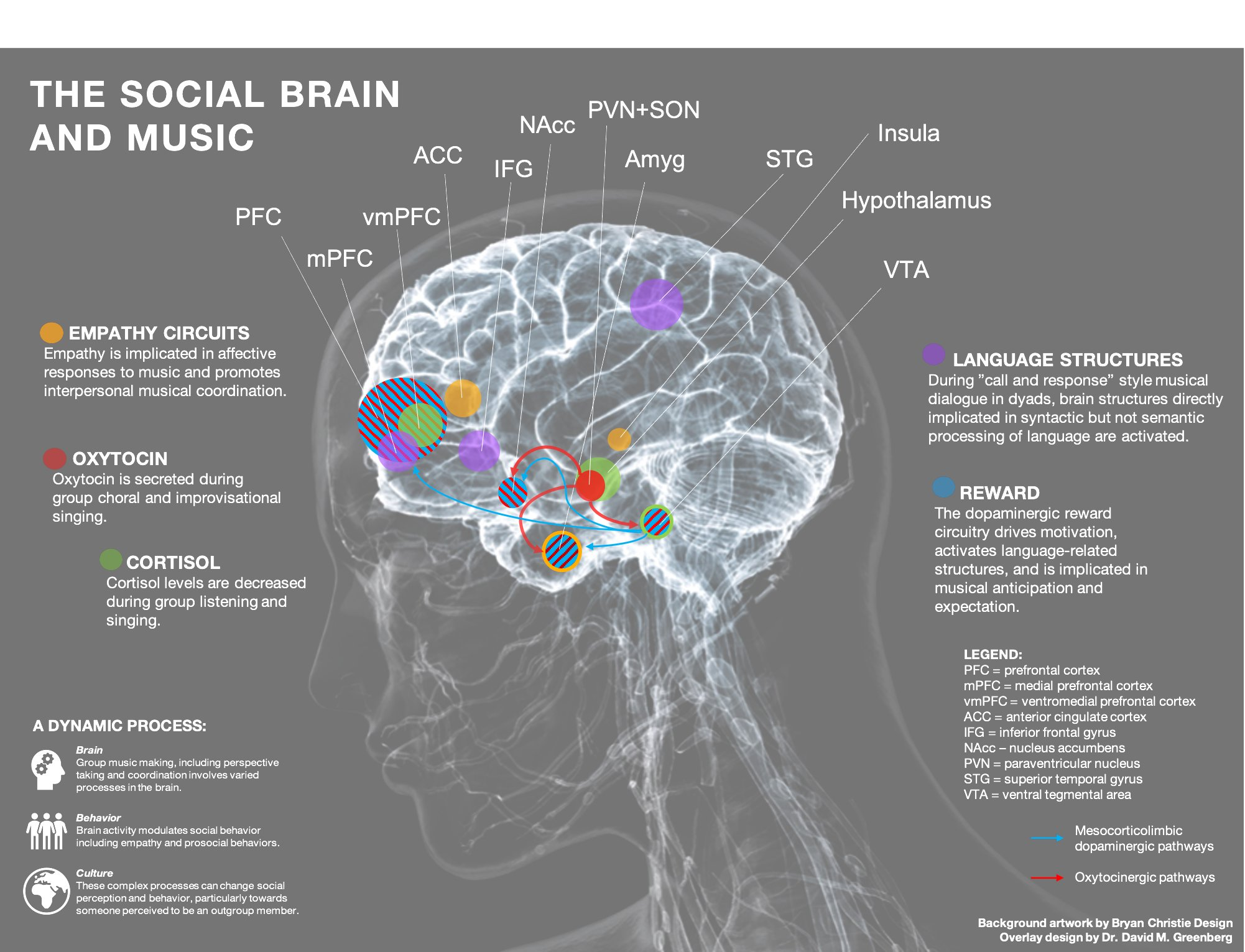 Brain labelled to show different areas that music affects